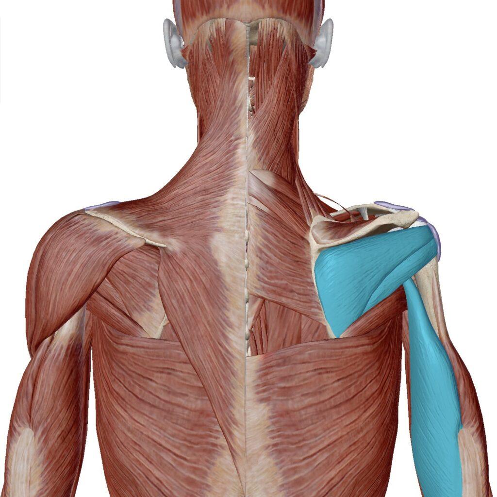 サーファーの肩痛(棘下筋・小円筋・上腕三頭筋)