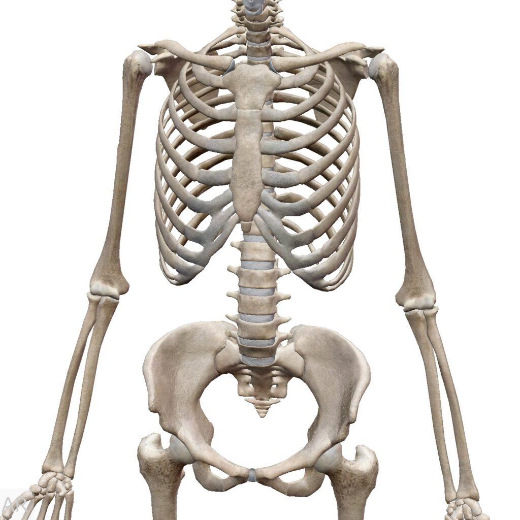 猫背の原因とその対処法(体幹)