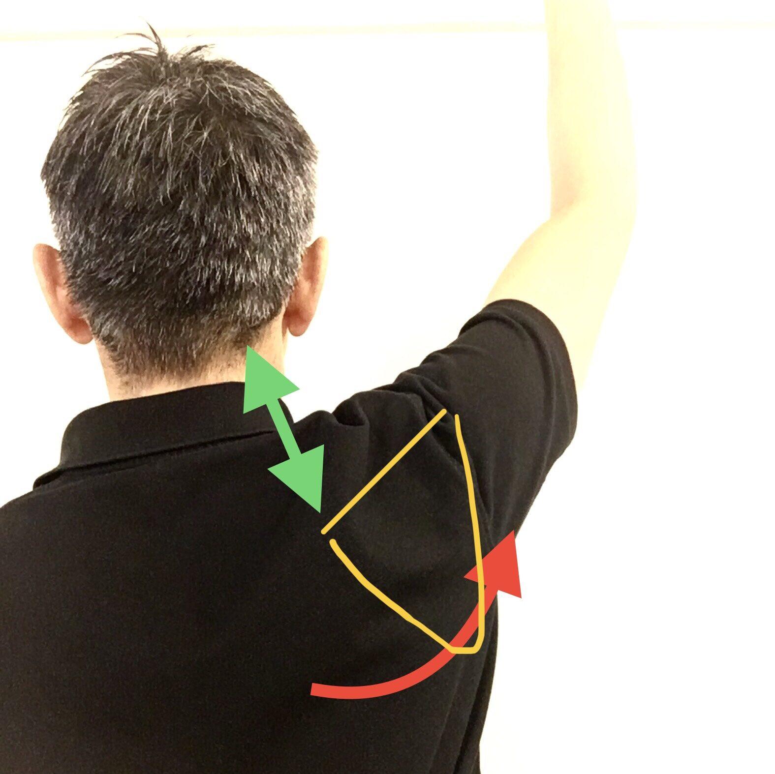 肩の痛み(肩甲骨の動き)
